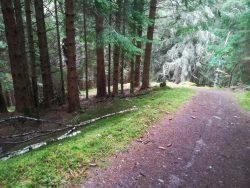 Forest track, The Great Glen Way, near Drumnadrochit