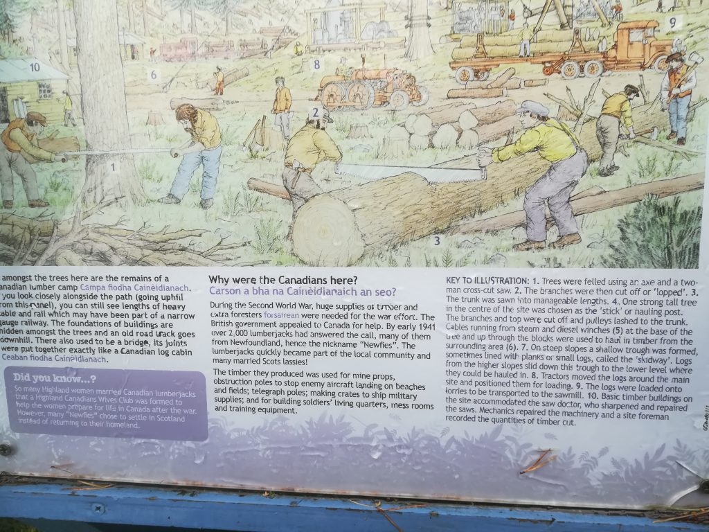 Information on Canadian lumberjacks who helped in World War Two