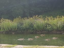 Cromford canal wildlife